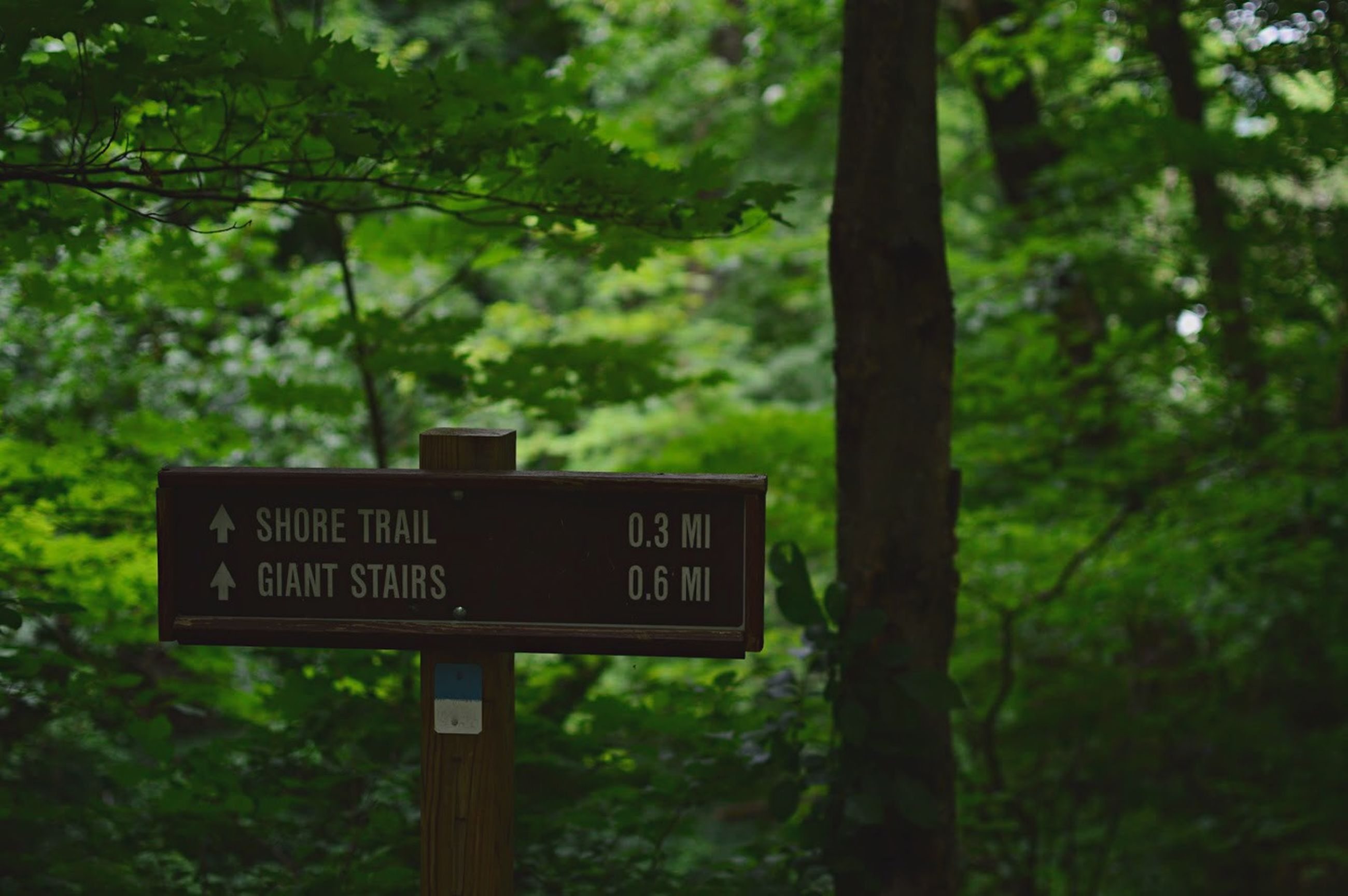 text, communication, tree, western script, information sign, sign, guidance, focus on foreground, forest, road sign, warning sign, growth, capital letter, non-western script, tree trunk, information, pole, direction, nature, directional sign