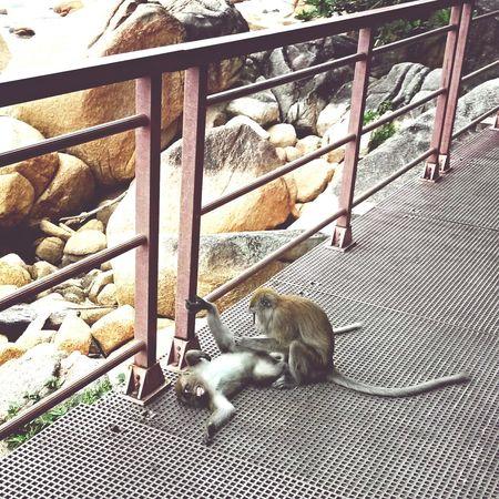 Servis Buang Kutu Monkey Animals Wildlife Eyeem Fauna