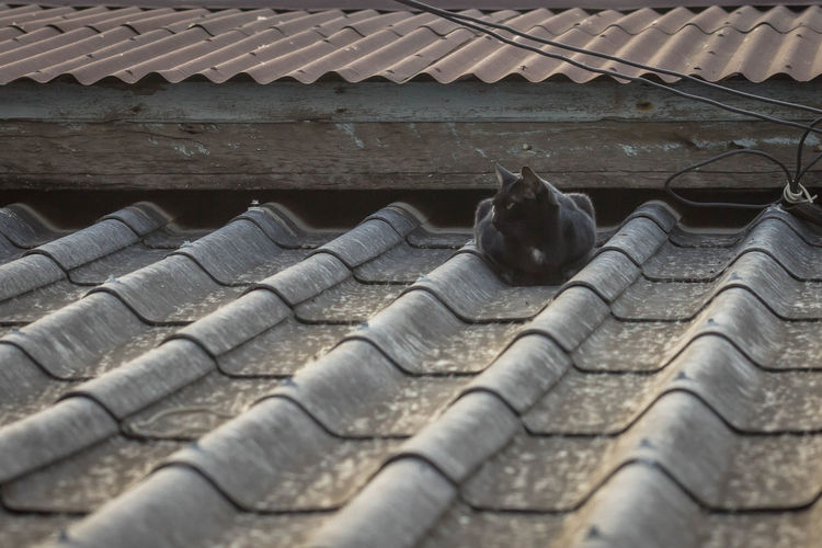 High angle view of a cat on roof