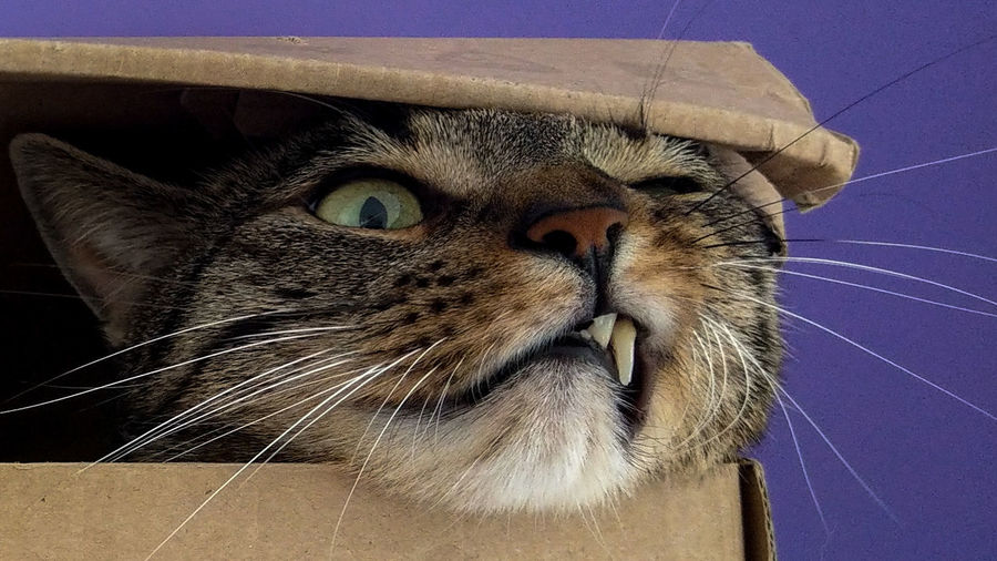 Closeup Mobilephotography Smartphonephotography Mobile Smartphone HTC HTC_photography Htc U11 Whiskers Cat Animal Box Indoors  Fangs Pets Animal Head