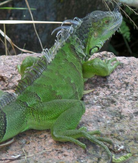 Wildlife Komodo Dragon Color Palatte Nature Dragon