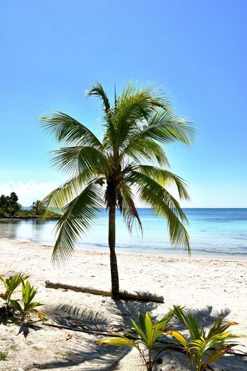Palm tree by sea against clear sky