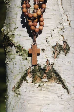 Rosary beads hang on birch tree background as a roman catholic symbol Bark Church Devotion Faith Jesus Jesus Christ Pray Roman Catholic Rosary Tree Wood Birch Tree Christ Close-up Daylight Hang Outdoors Praying Religion Religious  Sunny Day Symbolic