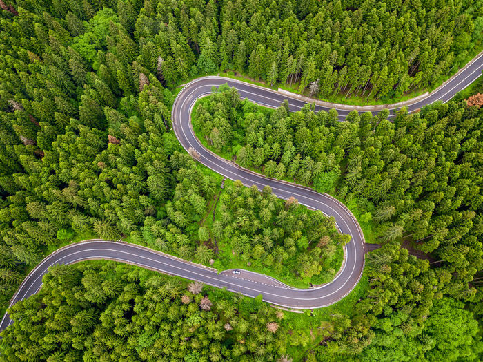 Winding road trough the forest