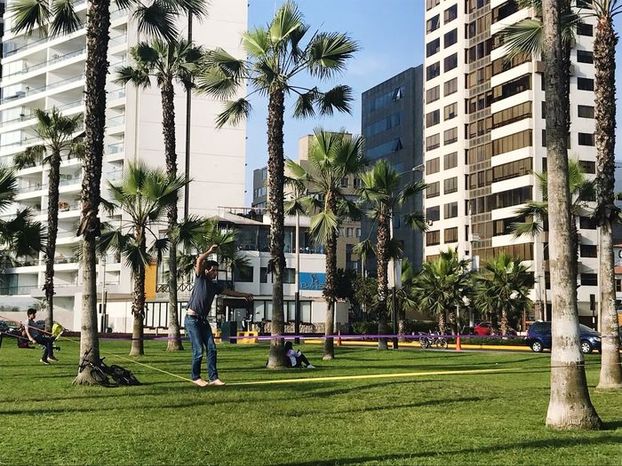 Palm Tree Tree Architecture Built Structure Building Exterior City Outdoors Day Togetherness Grass Men Growth Real People People Adult Sky Adults Only EyeEmNewHere Perspectives On Nature