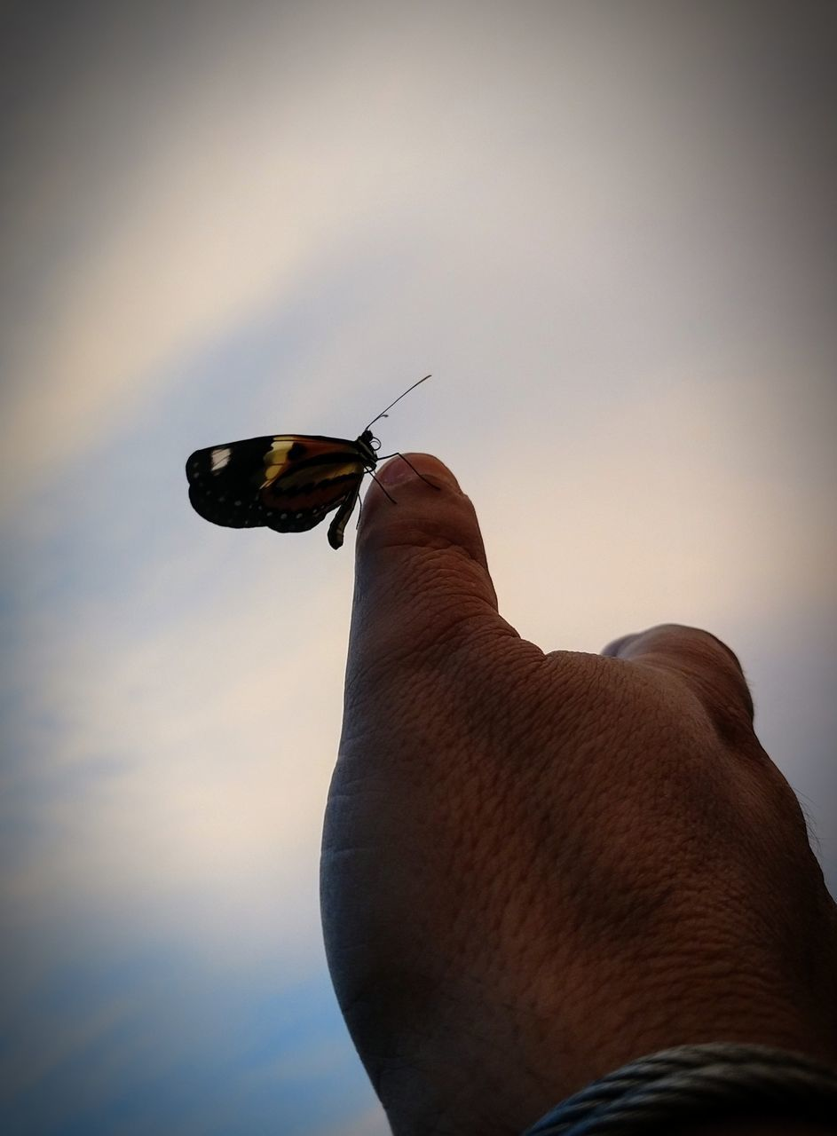 CLOSE-UP OF BUTTERFLY ON HAND HOLDING ROCK AGAINST SKY