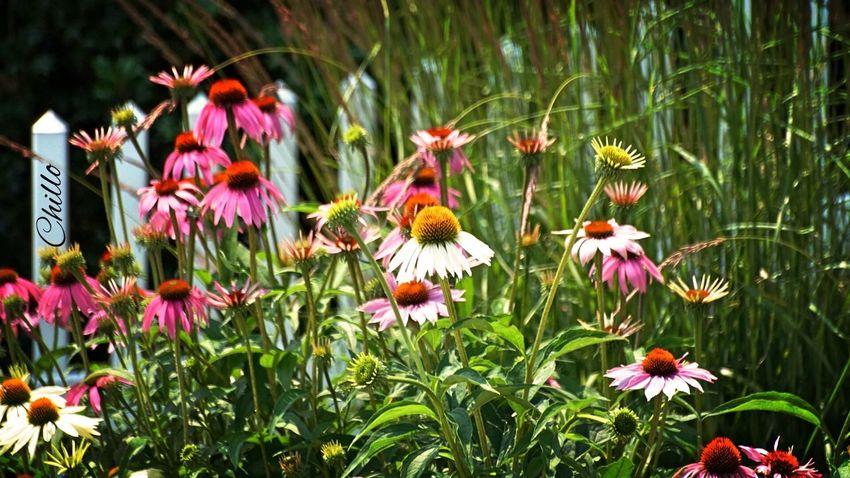 Magic garden. Beauty EyeEm Best Shots Color Nature Flowers Flowerporn Soaking Up The Sun Sony A6000 NYC Eye4photography