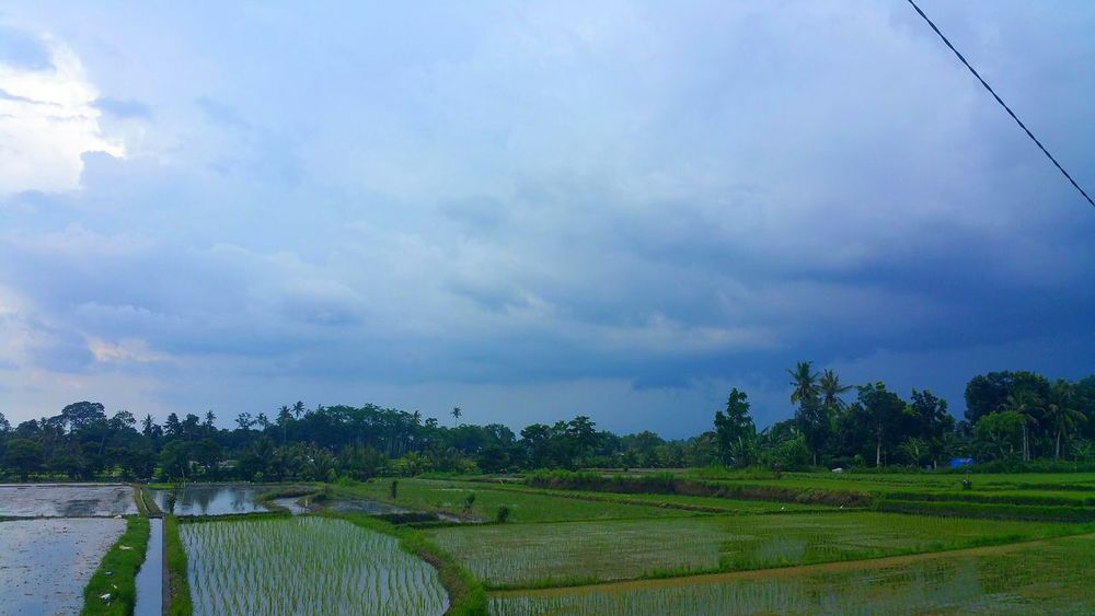 INDONESIA Indonesia_photography Bali March 2016 Rice Field Riceplantation Photography Beautiful Place EyeEm Best Shots EyeEm Gallery Share Your Adventure Sky