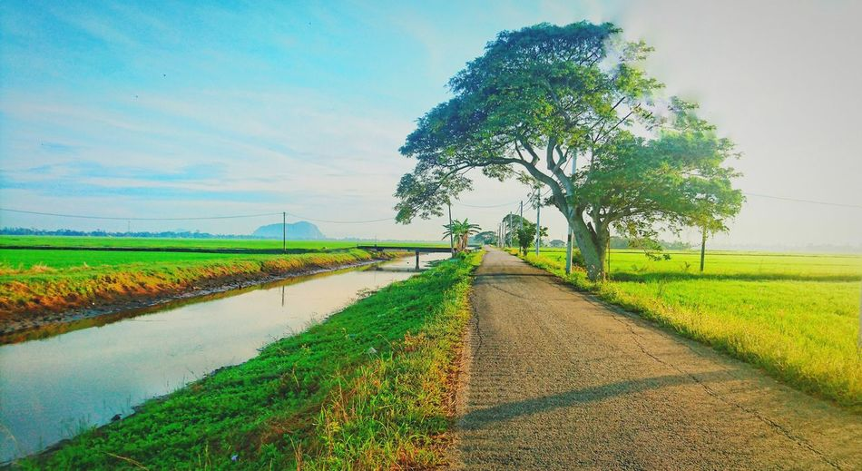 Agriculture Field No People Sony Xperia Z5 At Alor Setar Malaysia Paddy Fields On The Way To Home