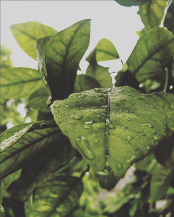 Nature Plant Rain Beauty In Nature Close-up Freshness Green Color Growth Leaf Nature Outdoors Plant Water