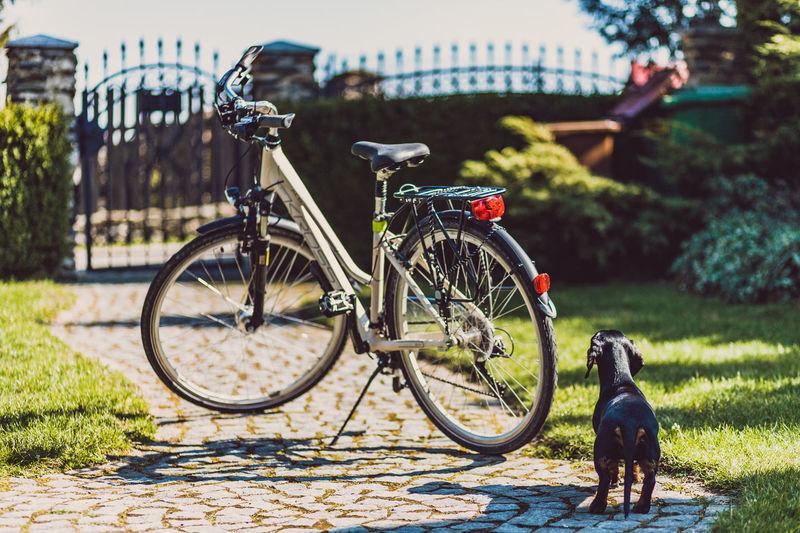 Bike Dachshund