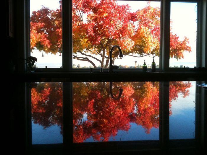 Fall pistache tree reflection