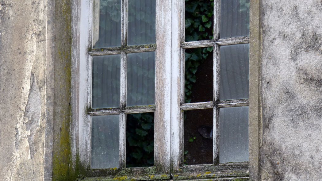 Old vs Nature. Window Architecture Built Structure No People Day Glass - Material Building Exterior Weathered Old Abandoned Closed Outdoors Building Security Wall - Building Feature Safety Damaged Protection Transparent Obsolete Window Frame Concrete Old Buildings Nature Caption