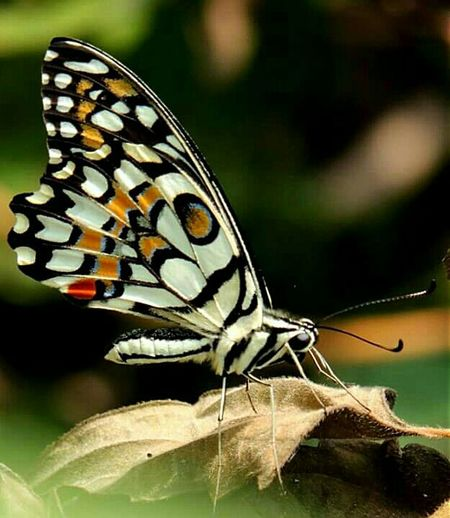 My Favorite Photo Hello EyeEm✌ Colorful Insect Colorful Butterfly Beauty_collection Beauty On Our Doorstep Enjoying Life Taking Photos Best EyeEm Shot India