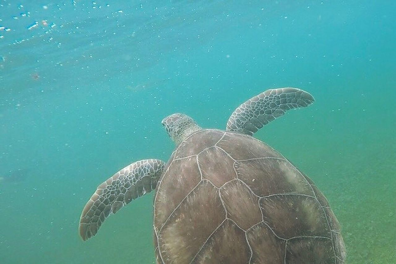 turtle, sea turtle, underwater, animal shell, reptile, animal wildlife, undersea, tortoise, sea, sea life, swimming, tortoise shell, nature, animals in the wild, one animal, water, animal themes, day, outdoors, close-up, no people