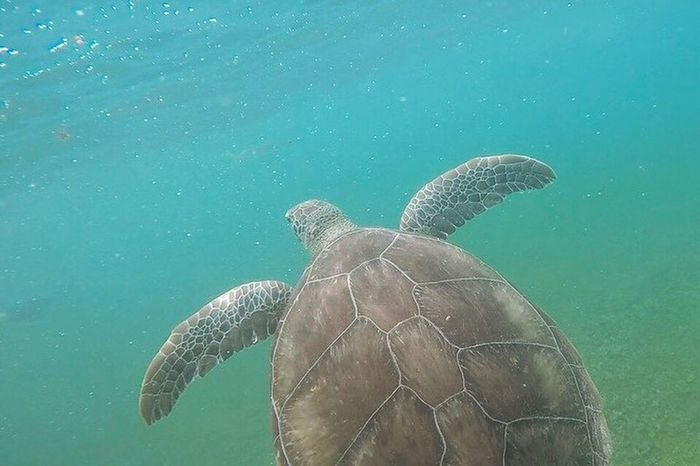 Wrapped up a great vacation by snorkeling with the tortugas! Snorkeling Sea Turtle Turtle Tortuga Sea Nature Ocean Atlantic Ocean Akumal Mexico Gopro Underwater Water Animal Nature Photography Breathing Space