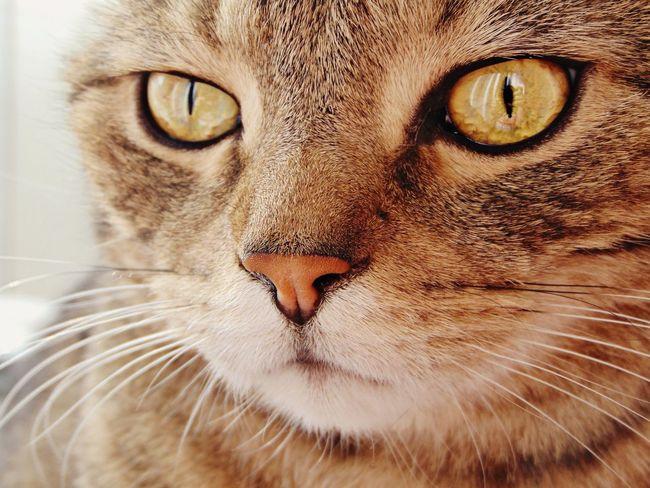 Cat Happy Eyes прелесть кот котэ няша усы шерсть глаза  няша пупсик мимими