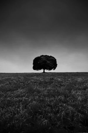 Stay ► Monochrome Blackandwhite Photography Blackandwhite Minimalism Photography Tree Sky Horizon Plant Nature Sea Land Beauty In Nature