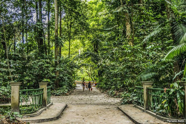 Nikon D5300 Brazil Eyem Gallery Eye4photography  EyeEm Best Shots EyeEm Nature Trees Beautiful