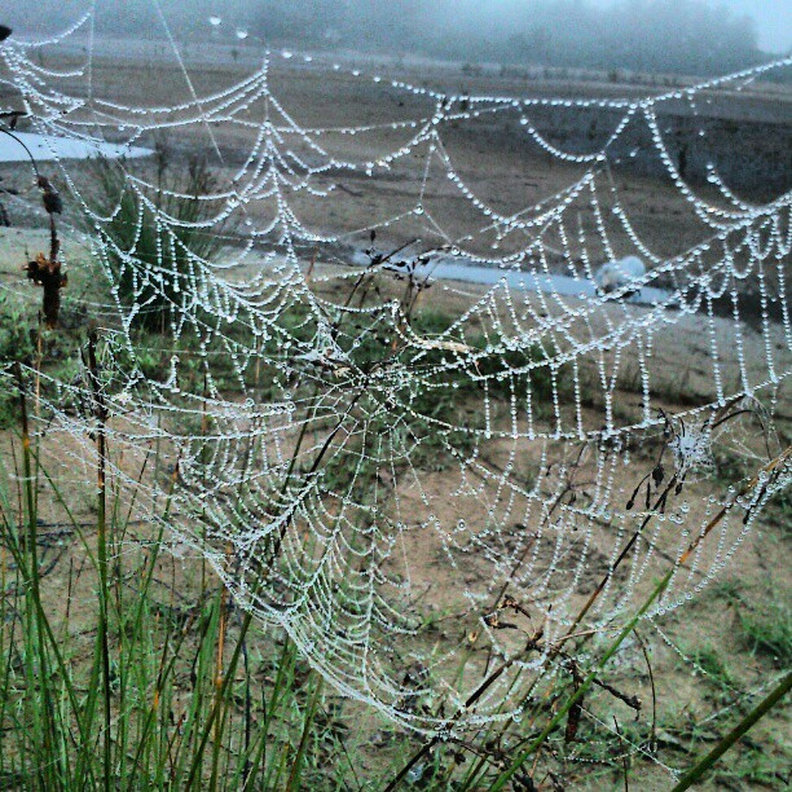 natural pattern, nature, tranquility, water, spider web, pattern, beauty in nature, landscape, close-up, day, outdoors, backgrounds, full frame, no people, high angle view, tranquil scene, scenics, focus on foreground, plant, non-urban scene