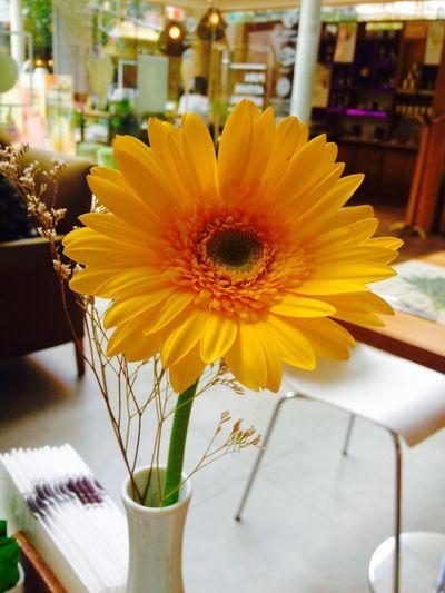 ?loveeee Flowers,Plants & Garden