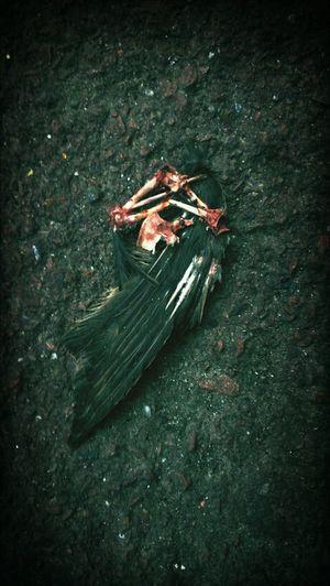 Birds Death Falling Angel