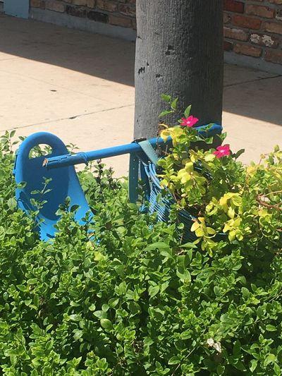 Flowering plants against blue wall