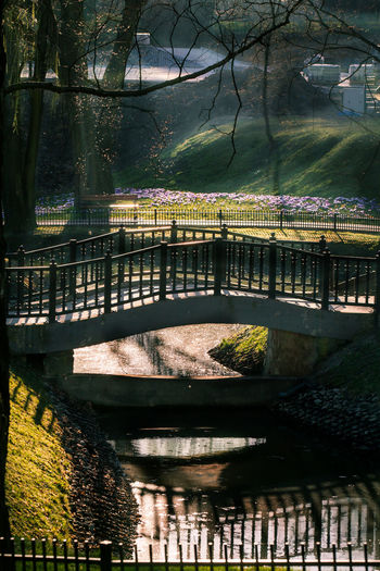 Architecture Bridge Bridge - Man Made Structure Built Structure Connection Day Erly Spring Jastrzębie - Zdrój Nature No People Outdoors Park River Soft Light Spring Springtime Sunlight Tree Water