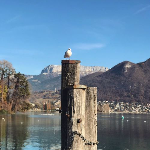 Lake Annecy, France 🇫🇷 Bird Mountain Animals In The Wild Water One Animal Animal Themes Nature Perching Day No People Animal Wildlife Beauty In Nature Lake Scenics Tranquility Tranquil Scene Waterfront Outdoors Seagull Wooden Post Fragility Focus On Foreground Freshness Nature Annecy, France