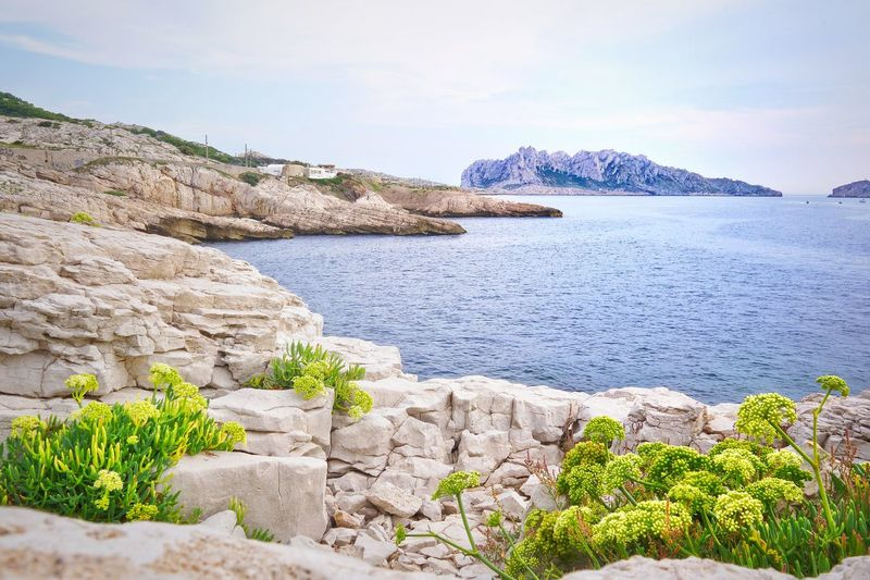 Calanques De Marseille Calanchi Marseille Seascape Sea Leaf Leave