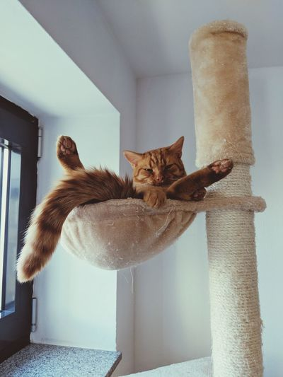 Cat Relaxing At Home