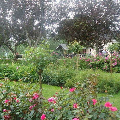 Ruusutarha Rosegarden Jardinderosas Jardinderoses Tampere Tamperelove Tre Visittampere Visitfinland Suomi Finland Nature Luonto Naturaleza Beautiful Kaunis Kesä