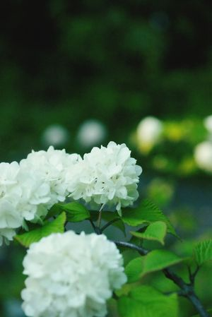 Taking Photos Flowers White EyeEm Nature Lover Beautiful Nature Garden Nature_collection
