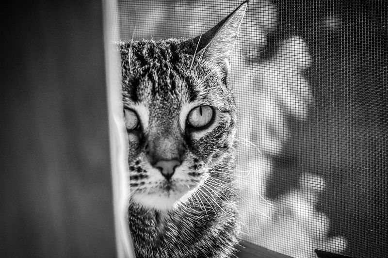 Animals Cat Cat Eyes Cat Lovers Catlovers Catoftheday Cats Cats Of EyeEm Cat♡ Monochrome Pet Pet Photography  Pets