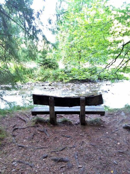 Wald Bench Single Single Object Wood Bank Parkbank Holzbank Wasser Fluss Fluss Im Sommer River Waldboden Symmetry Symetrical Semetry  Erholung Harz Harzmountains Nature Natur Ruhe Und Stille Ruhe Stille No People