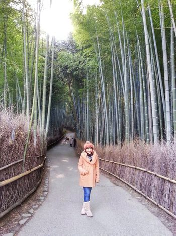 Arashiyama Kyoto 2014 Hello World bamboo forest ?
