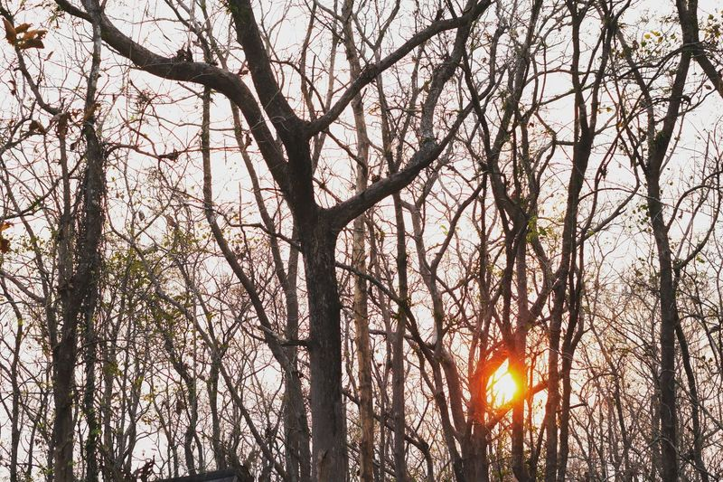 Sunset Tree Low Angle View Branch Nature Sunlight Beauty In Nature Growth Outdoors Sunset Sun No People Flower Sky