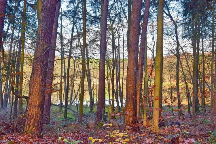 Bogensee Nature Photography Autumn Beauty In Nature Branch Change Day Forest Growth Hidden Landscape Leaf Nature Nature_collection Naturelovers No People Outdoors Scenics Sky Tranquil Scene Tranquility Tree Tree Trunk Wilderness Area WoodLand