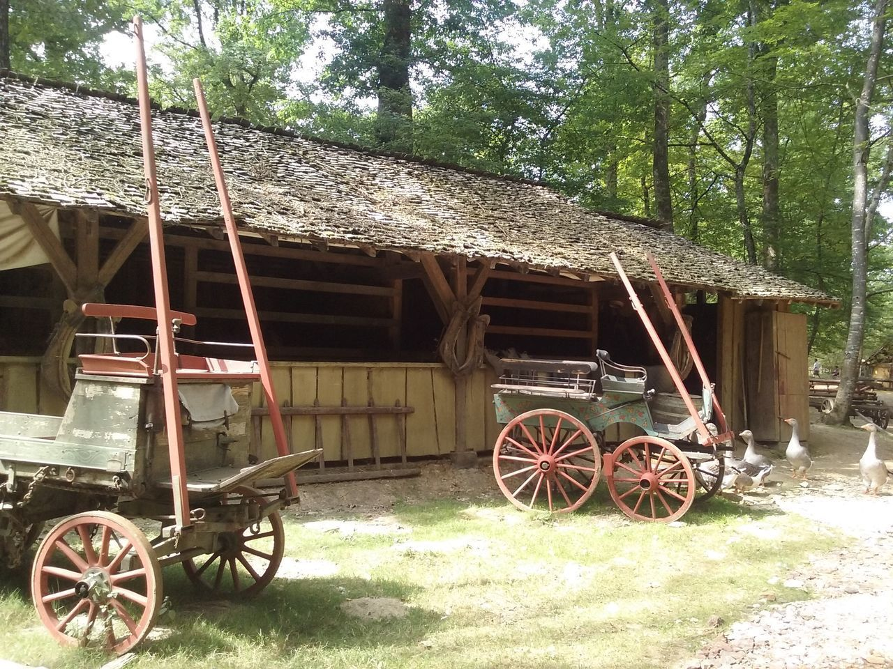 wagon wheel, transportation, wheel, horse cart, horsedrawn, mode of transport, day, tree, outdoors, built structure, no people