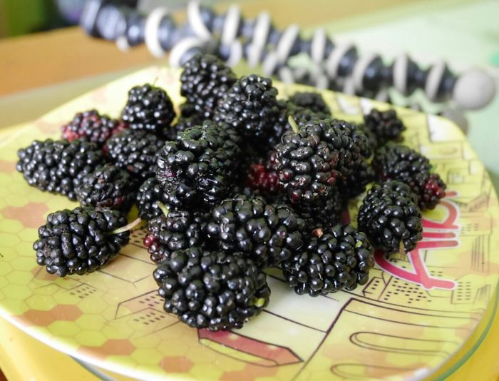 Fresh Mulberry Food And Drink Table Healthy Eating Indoors  Fruit No People Food Plate Close-up Freshness Black Olive Ready-to-eat Day Black Fruits Sweet Fruits Jam Healthy Lifestyle First Eyeem Photo