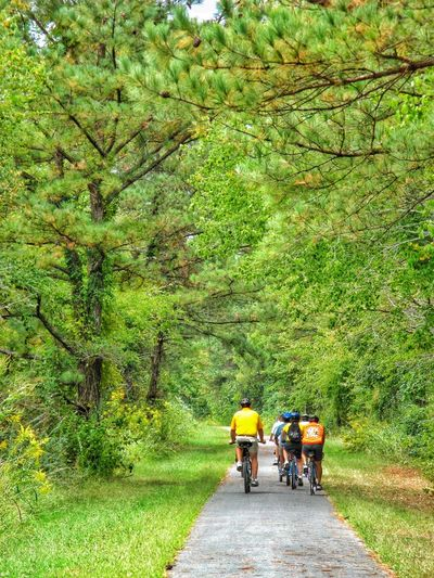Bicycling the Chief Ladiga Trail Bicycling Trail Bicycle Trail Ride Alabama Forest Woods Trees