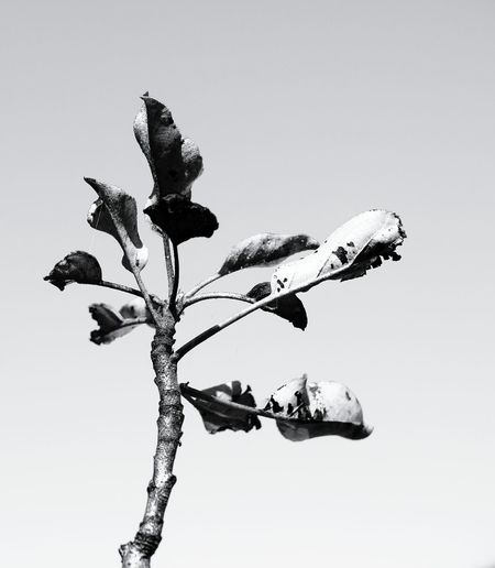 Apple tree Blackandwhite Simplicity Lines&Design Nature Eye4black&white  EyeEm Gallery EyeEm Best Edits Minimalism Creative Light And Shadow Plants And Flowers Darkness And Light Learn & Shoot: Simplicity