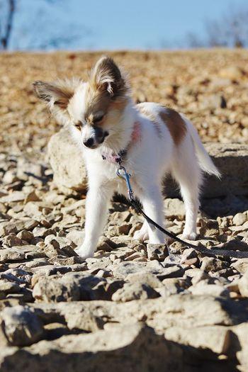 Animal Themes Domestic Animals Pets One Animal Mammal Dog Day
