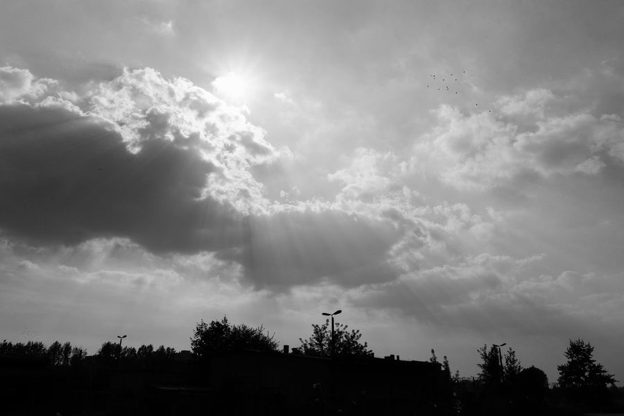 Beauty In Nature Cloud Cloud - Sky Cloudy Day From My Point Of View FUJIFILM X-T10 Growth Landscape Majestic Nature No People Non-urban Scene Outdoors Outline Scenics Silhouette Sky Solitude Sun Sunbeam Tranquil Scene Tranquility Tree Wasiak