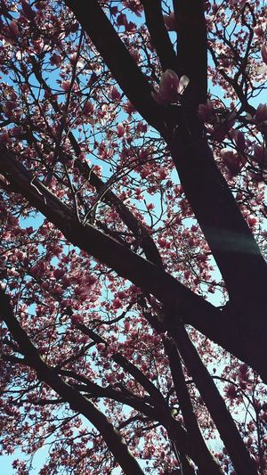Showcase April What I Value Things I Like Trees