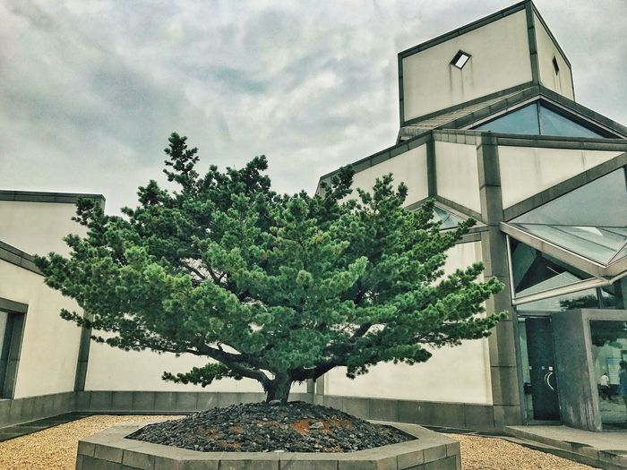 Tree Growth Plant Bonsai Tree Architecture Nature Built Structure No People Sky Building Exterior Day Outdoors Suzhou Museum