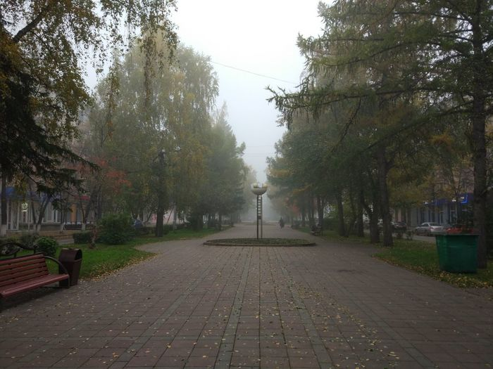 Tree Plant Footpath The Way Forward Street Direction Nature Day City Fog Park Growth No People Outdoors Tranquility Diminishing Perspective Sky Cobblestone Beauty In Nature Treelined Paving Stone