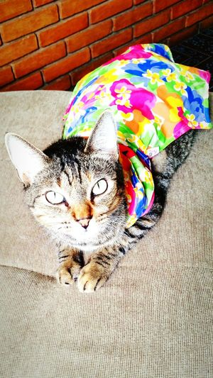 """Bandida is """"her"""" name :) Cat Lovers Cat Cat♡ Catsofinstagram Catoftheday Cats Cat Eyes Pets Cute Pets"""
