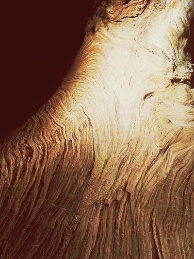 Inside tree trunk at Jefferson Trails