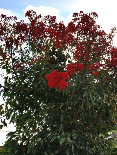 Beauty In Nature Red Outdoors Tree Garden Red Flowers